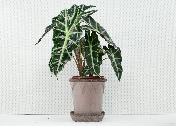 Elizabeth Handmade Flowerpot Grey Color ⌀ 14 cm from Bergs Potter - with flower