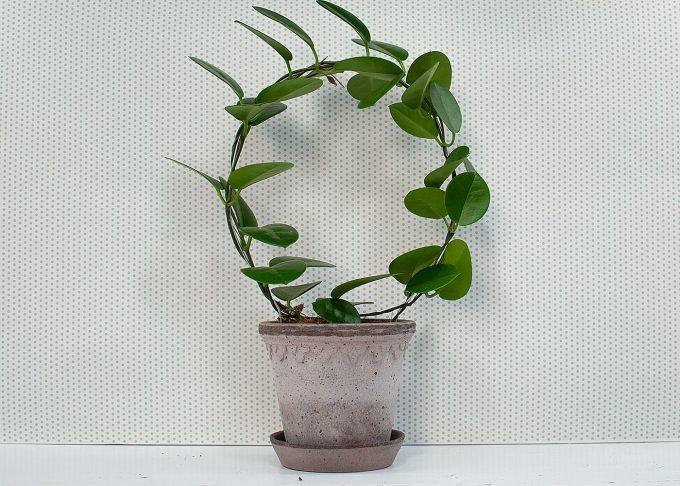 Kopenhagen Handmade Flowerpot Grey Color ⌀ 14 cm from Bergs Potter - with flower
