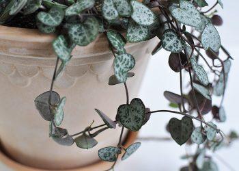"""Handgjord kruka Terrakotta ⌀ 14 cm """"Köpenhamn""""   Bergs Potter   Willekulla Lantlig Inredning   närbild"""