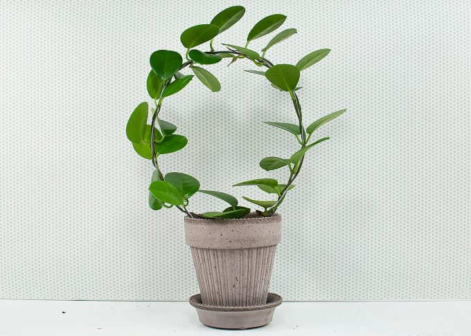Simona Handmade Flowerpot Grey Color ⌀ 14 cm from Bergs Potter - with flower