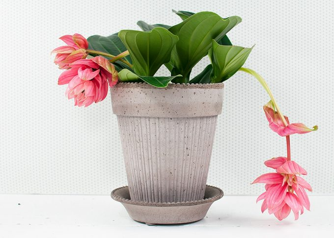 Simona Handmade Flowerpot Grey Color ⌀ 18 cm from Bergs Potter - with flower