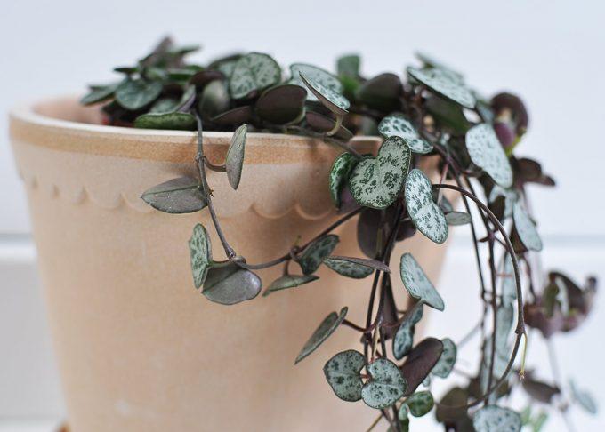 "Handgjord kruka Terrakotta ⌀ 14 cm ""Helena""   Bergs Potter    Willekulla Lantlig Inredning   närbild"